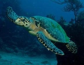 Schildkröte im Nationalpark