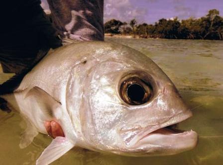 Fliegenfischen im Korallenarchipel