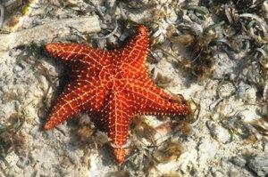 Unterwasserleben auf der Karibikinsel Los Roques