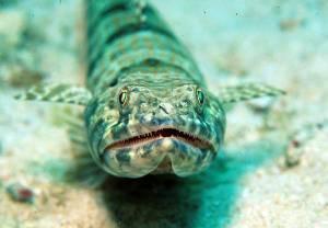 Unterwasserwelt zum Tauchen
