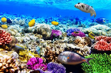 Tauchen auf der Karibikinsel Bonaire