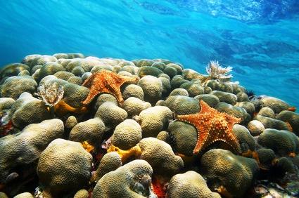 Seesterne bei Cozumel