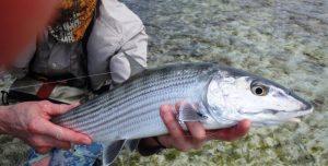 Los Roques Fliegenfischer
